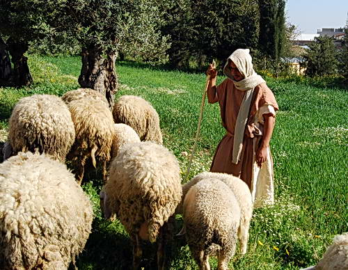 Nazareth Village - Sheperd with sheep. Photo by Ferrell Jenkins.
