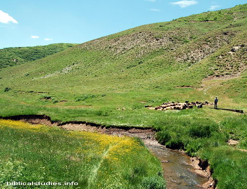 A shepherd provides green pastures and quiet water for his sheep. Photo by Ferrell Jenkins.