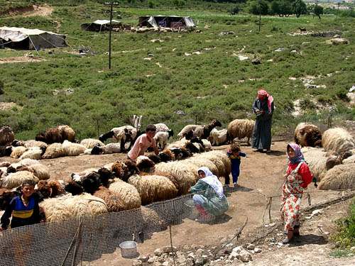 Shepherd settlement in northeastern Syria. Photo by Ferrell Jenkins.