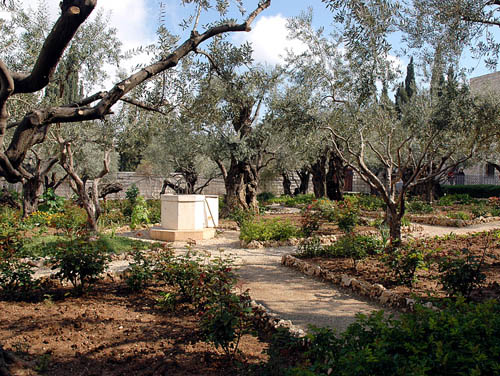 Garden of Gethsemane on the Mount of Olives. Photo by Ferrell Jenkins.