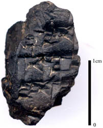 Cuneiform Tablet from Tell el Daba.
