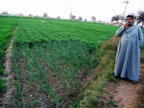 Field in the land of Goshen. Photo by Ferrell Jenkins.