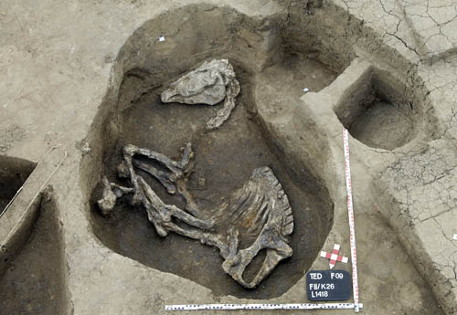 Hyksos horse skeleton discovered at Tell el Daba.