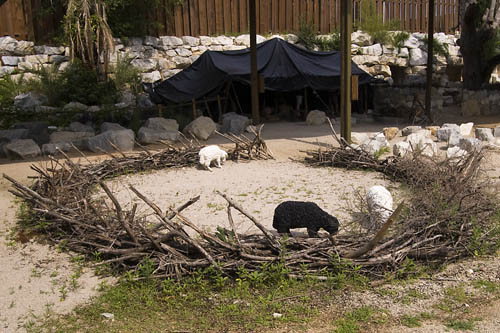 Sheepfold at Explorations in Antiquity Center. Photo by David Padfield.