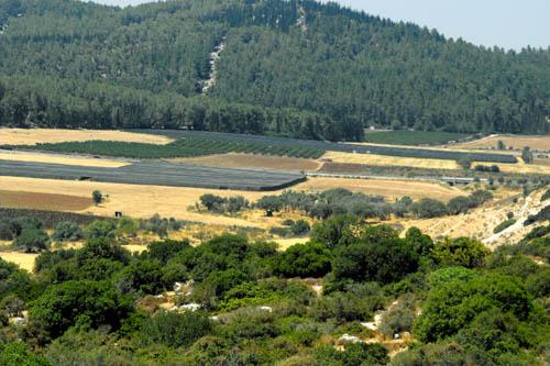 Elah Valley from Khirbet Qeiyafa. Photo by Luke Chandler.