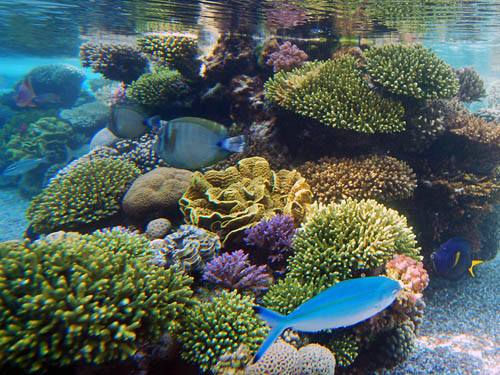 Fish and coral in the Red Sea at Eilat. Photo by Ferrell Jenkins.