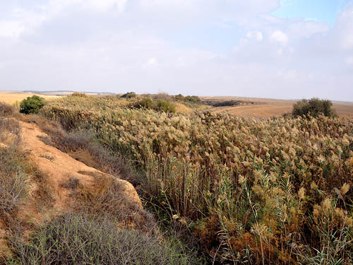 Wadi Gerar near Ziklag. Photo by Ferrell Jenkins 2009.
