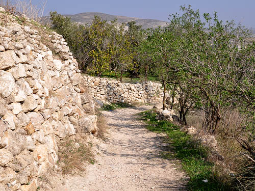 A path at Samaria. Photo by Ferrell Jenkins.