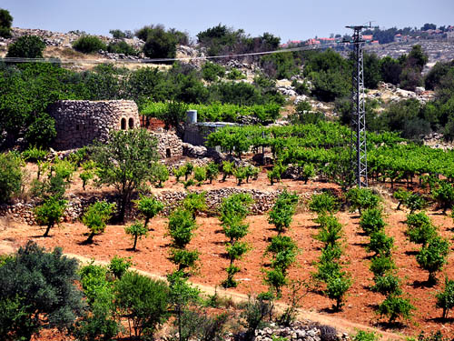 Vineyard with a Watchtower SW of Bethlehem. Photo by Ferrell Jenkins.