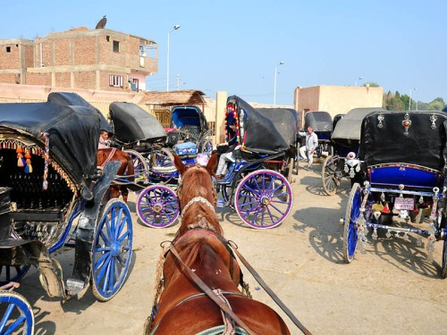 Horses and carriages at Edfu. Photo by Ferrell Jenkins.