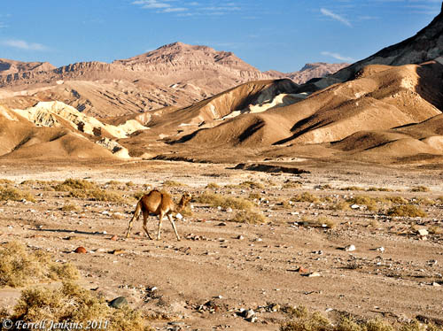 A scene in the Sinai Peninsula. Photo by Ferrell Jenkins.