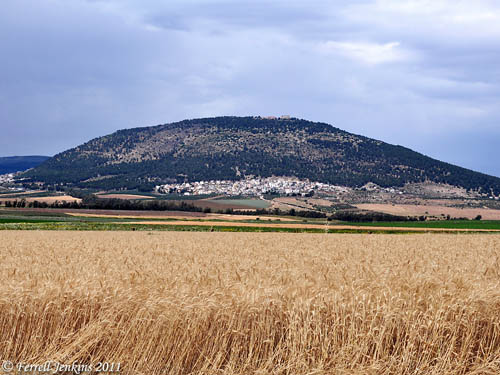 Wheat ready for harvest at En-Dor near Mount Tabor. Photo by Ferrell Jenkins.