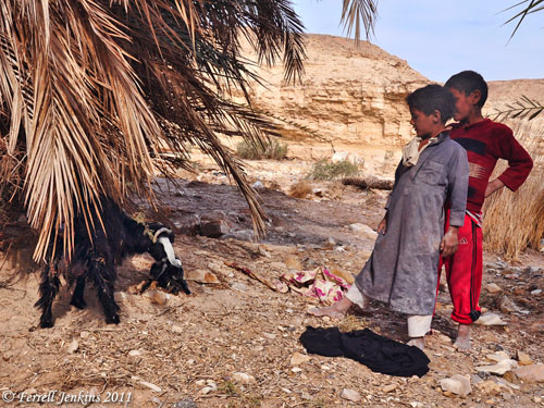 Bedouin boys keeping watch over a goat and newborn kid. Photo by Ferrell Jenkins.