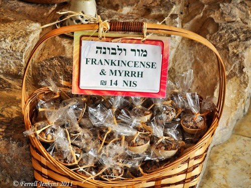 Frankincense and myrrh on the Incense Route at Avdat. Photo by Ferrell Jenkins.