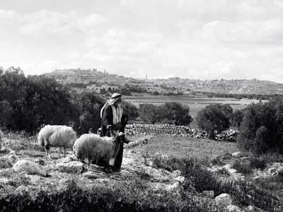 Shepherds with sheep on Christmas day. Bethlehem on the ridge. Photo: LifeintheHolyLand.com.