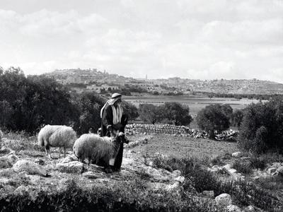 Shepherds with sheep on Christmas day. Bethlehem on the ridge. Photo: LifeintheHolyLand.com.