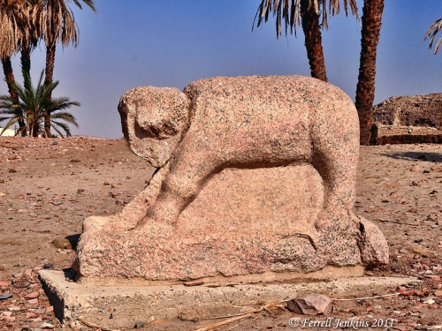 Granite Elephant on Elephantine Island, Aswan, Egypt. Photo by Ferrell Jenkins.