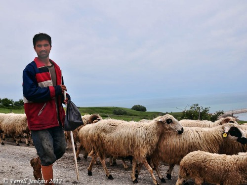 A shepherd overlooking the Black Sea near Sinop, Turkey. Photo by Ferrell Jenkins.