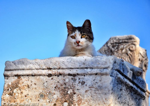 One of the Cats at Ephesus. Photo by Ferrell Jenkins.