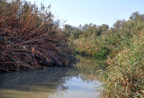 The Jordan River at the site of the baptism of Jesus. View south. Photo by Ferrell Jenkins.
