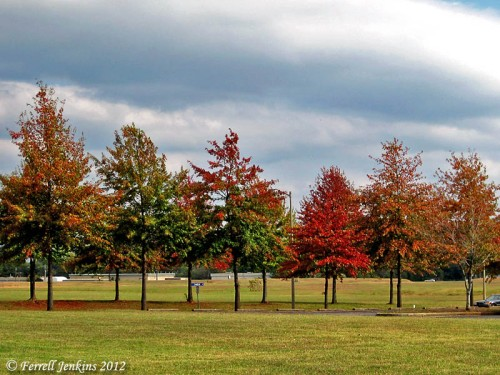Fall Leaves in North Alabama. Photo by Ferrell Jenkins.