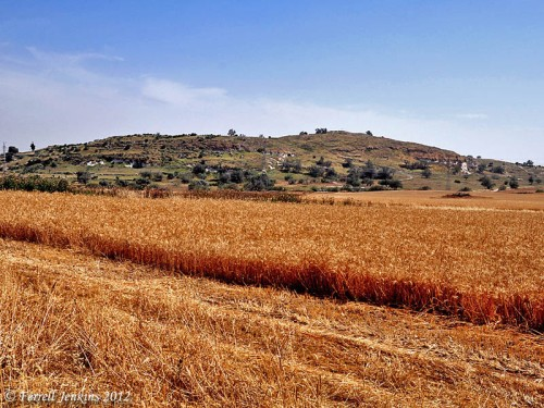 Tel es-Safi/Gath with wheat fields in the plain to the west. Photo by Ferrell Jenkins.
