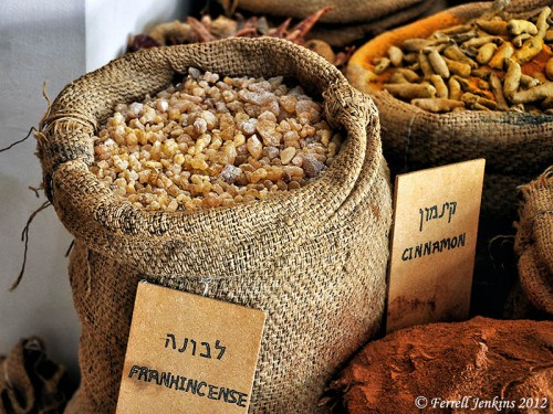 Frankincense on the ancient spice route at Avdat, Israel. Photo by Ferrell Jenkins.