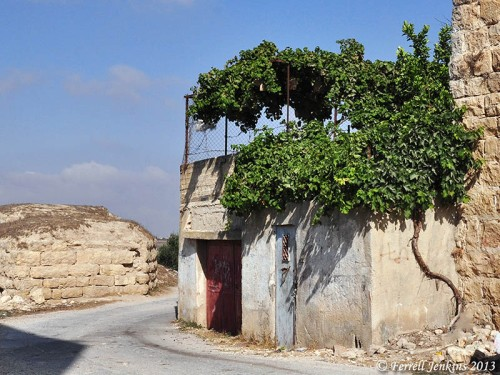 A vine growing up the side of a house to provide shade on the roof. Photo by Ferrell Jenkins at Gibeon.