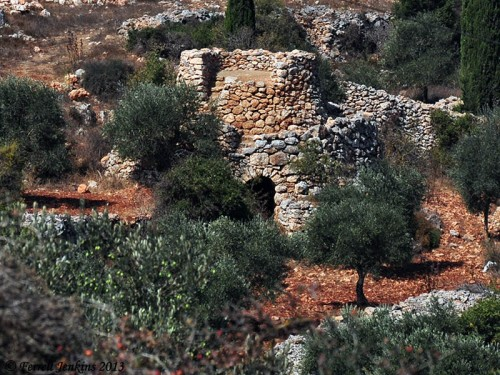 A watchtower in an olive orchard in the West Bank. Photo by Ferrell Jenkins.