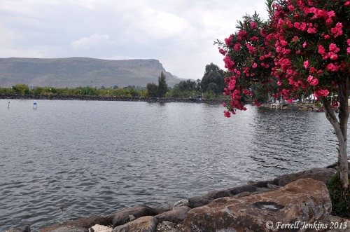 Sea of Galilee at Nof Ginosaur, April 18, 2913. Photo by Ferrell Jenkins
