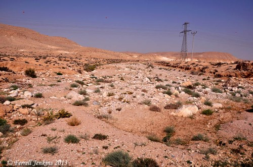 Wadi Zin near Avedat in the Negev of Israel. Photo by Ferrell Jenkins.