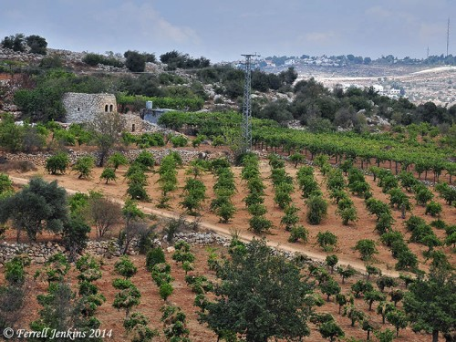 Vineyard Near Bethlehem. Photo by Ferrell Jenkins.