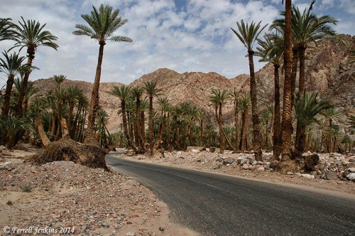 Wadi Feiran in the Sinai Peninsula. Photo by Ferrell Jenkins.