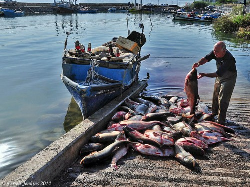 Fisherman at Tiberias Port unloading the catch of Biny. Photo by Ferrell Jenkins.