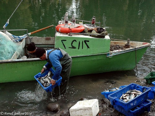 Fishermen unloading their catch at the outlet of the Jordan River from the Sea of Galilee. Photo by Ferrell Jenkins.