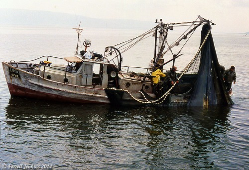 Fishing boat getting ready to unload a purse seine at Tiberias. Photo by Ferrell Jenkins, 1992.