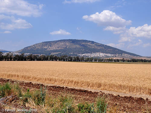 Wheat field with view NW to Mount Tabor. Photo by Ferrell Jenkins.