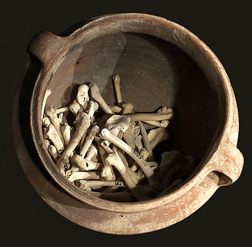 Cooking pot with chicken wing bones from the excavation.