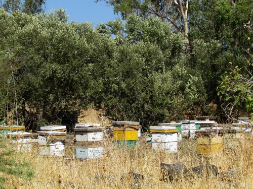 Bee hives in the Jordan River Park near Tel Bethsaida. Photo by Rebekah Dutton.