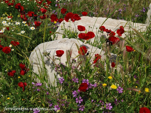 Wild flowers growing at ancient Pergamum. Photo by Ferrell Jenkins.