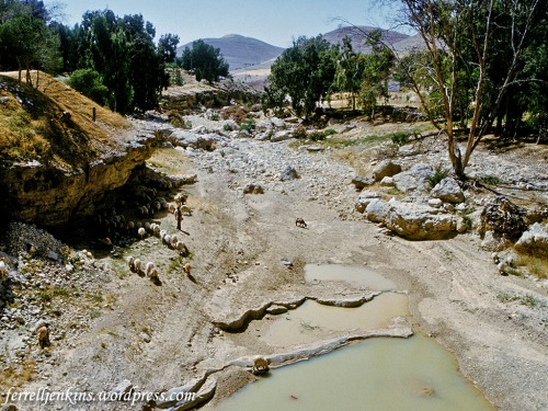 A wadi between Madaba and the Arnon Gorge along the King's Highway in transjordan. Photo by Ferrell Jenkins.