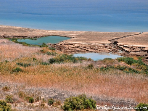 Sinkholes along the shore of the Dead Sea. Photo by Ferrell Jenkins.