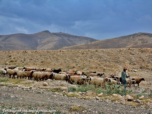 A shepherd leads his flock in the Jordan Valley. Photo by Ferrell Jenkins.