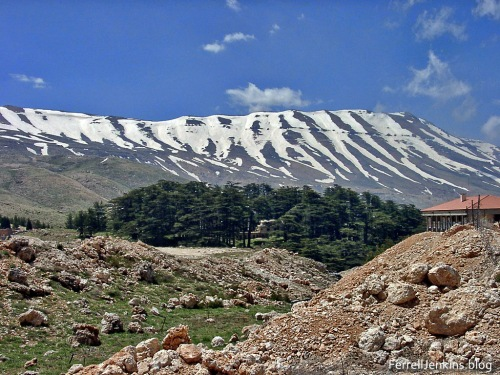 A view of the clump of cedars at Besharre, Lebanon. FerrellJenkins.blog.