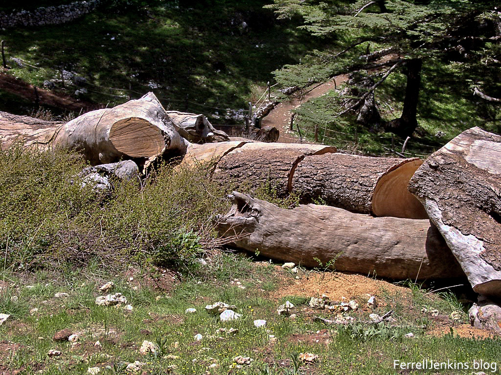 A fallen cedar at Besharre in northern Lebanon. FerrellJenkins.blog.
