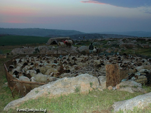 A shepherd watches his flock by night at Heshbon. Photo by Ferrell Jenkins.