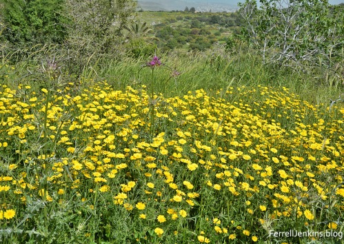 Flowers of the field at Neot Kedumim. ferrelljenkins.blog.