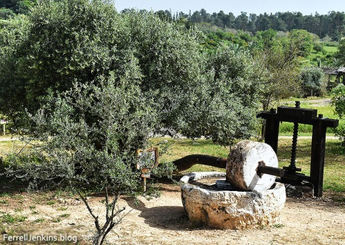 Olive tree, crushing stone, and press at Neot Kedumim. Photo: ferrellJenkins.blog.