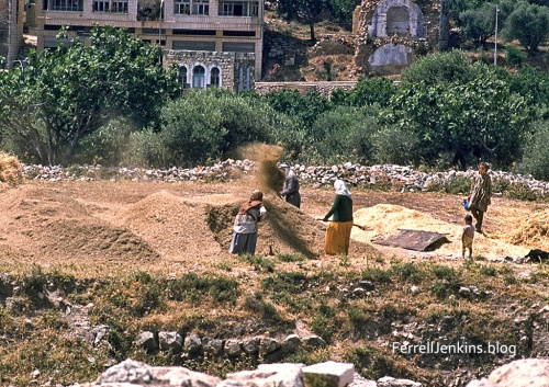 Winnowing grain at ancient Shechem. ferrelljenkins.blog.