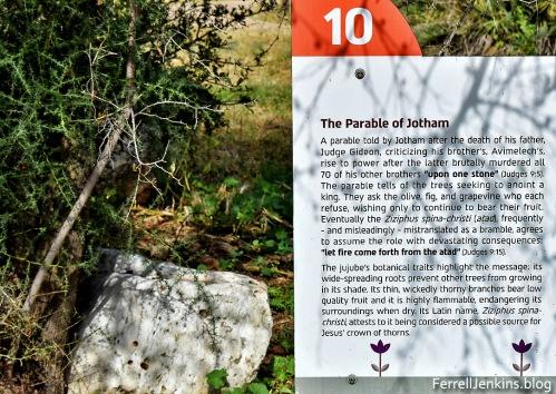 The atad tree in the parable of Jotham. Photo: ferrelljenkins.blog